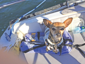 dog on boat in San Diego Bay