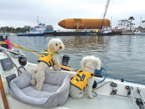 dogs with life jackets on boat