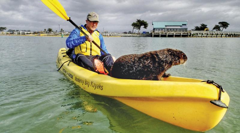 Otter on a Kayak