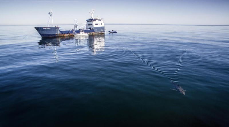 Ocearch shark research vessel with barrels of bourbon