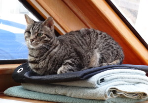 rescue animal becomes a boat cat