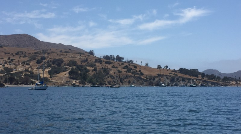 Kelp cultivation in Catalina Island