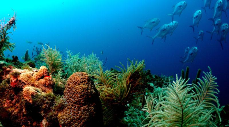 Florida Coral Reefs NASA astronauts