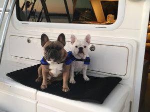 dogs aboard boat