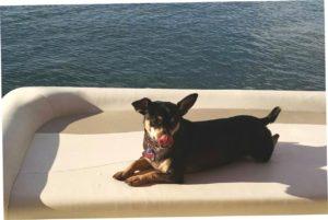 dog aboard boat