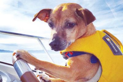 From stray dog to Capt. Jackshund