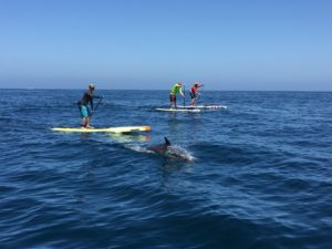 Training for Avalon to Dana Point paddle