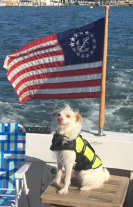Parson Russell Terrier dog aboard boat