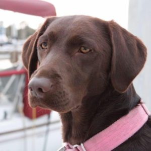 dog aboard boat sailing California Yacht Marina