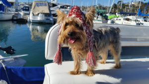 Yorki aboard boat