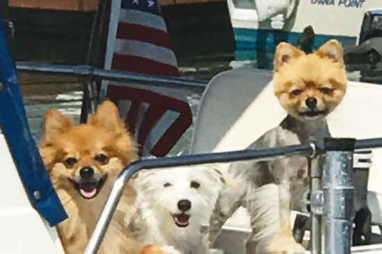 All aboard, three dogs on a tour