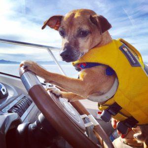 Dog Aboard 9.08