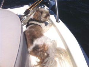 Dog Aboard 6.30