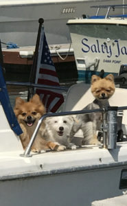 Dog Aboard 11.3