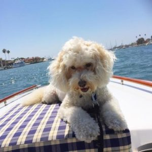 Dog Aboard 2.24