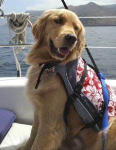 Dog Aboard 1.27