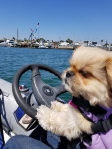 Dog Aboard 12.01