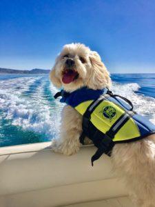 Dog Aboard 3.24