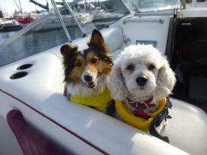 Dog Aboard 1.13