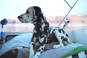 Dog Aboard 12.15