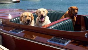 Dog Aboard 3.10
