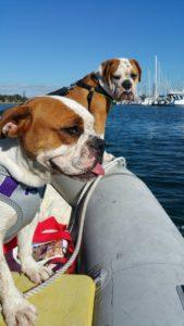 Dogs Aboard 6.16