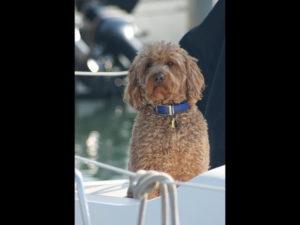 Dog Aboard 5.19