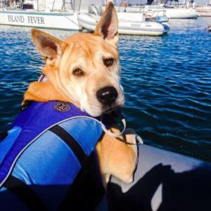 Dog Aboard 4.07