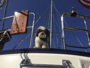 Dogs Aboard 8.11