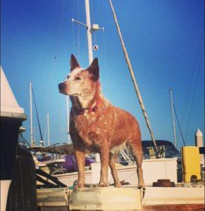 Dog Aboard 5.05