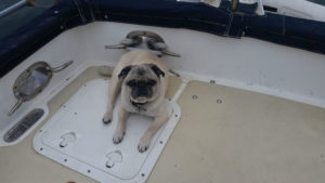 Dog Aboard 9.22