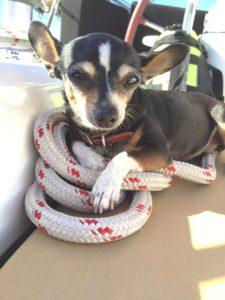 Dog Aboard 12.29