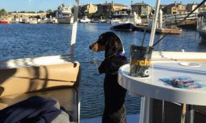 Dog Aboard 6.02