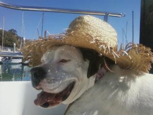 Dogs Aboard 7.28