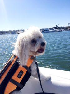 Dog Aboard 10.20