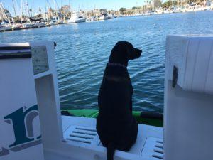 Dog Aboard 4.21