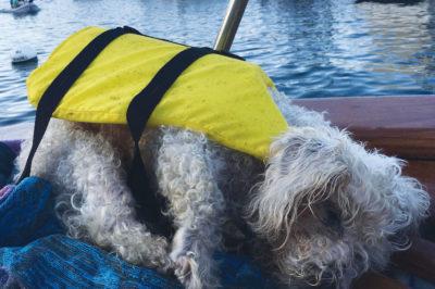 Bentley McStockton visits Catalina Island