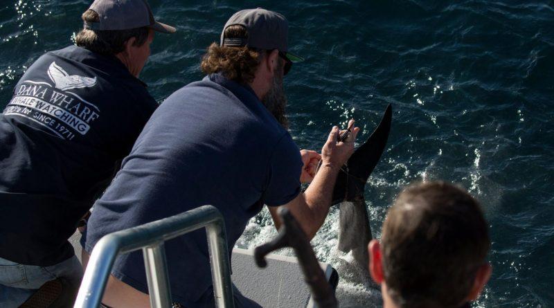 Dana Point Dolphin Save