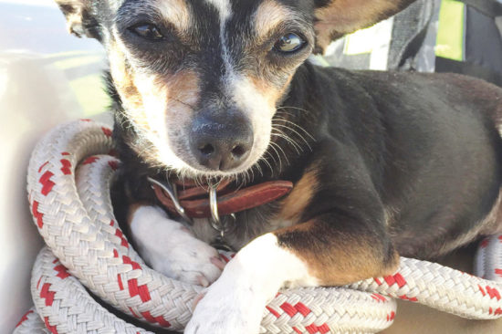 Lounging on Monkey Girl with Olive the Chihuahua