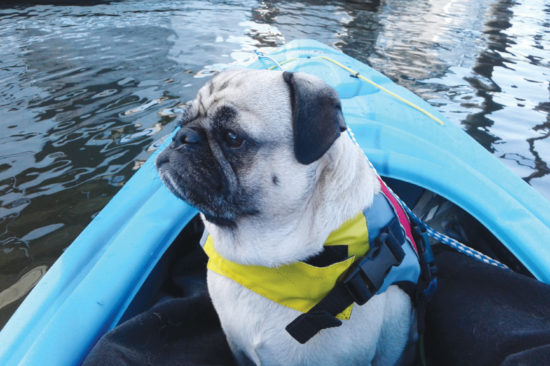 SAFETY FIRST WITH BENNY THE PUG