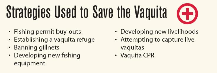 Vaquita Strategies