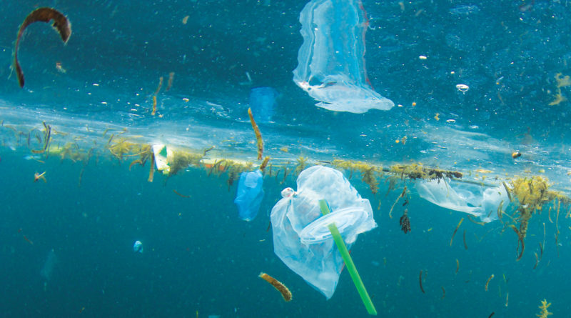 Avalon plastic straw ban