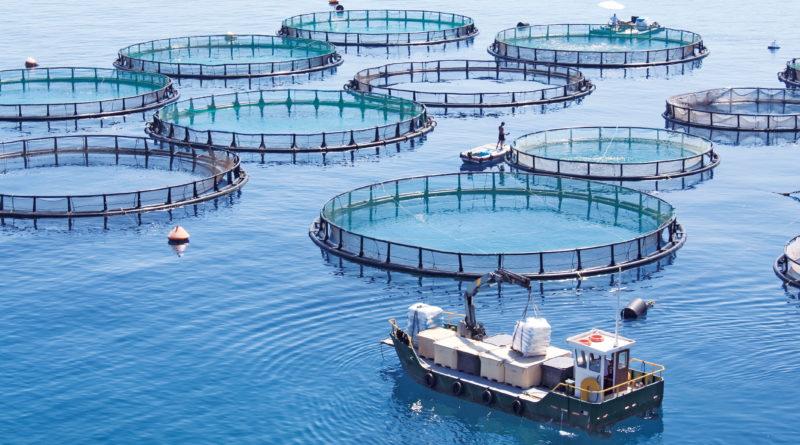San Diego Aquaculture