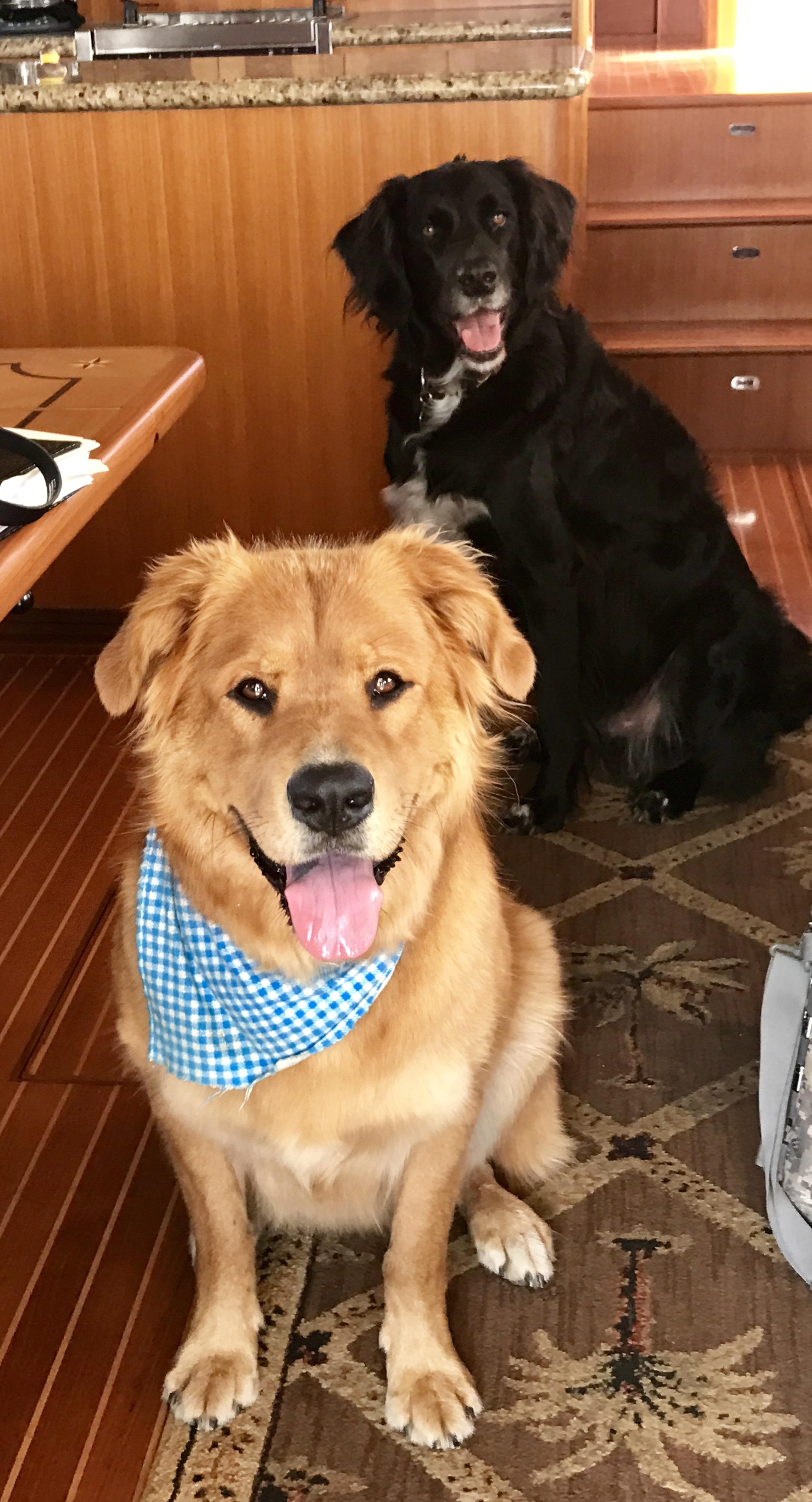 Moose & Luna
