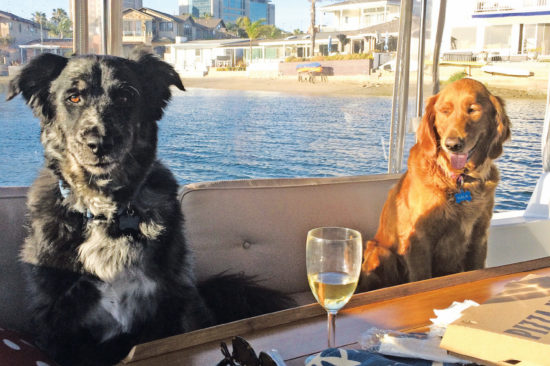 DUFFY DOGS IN NEWPORT HARBOR