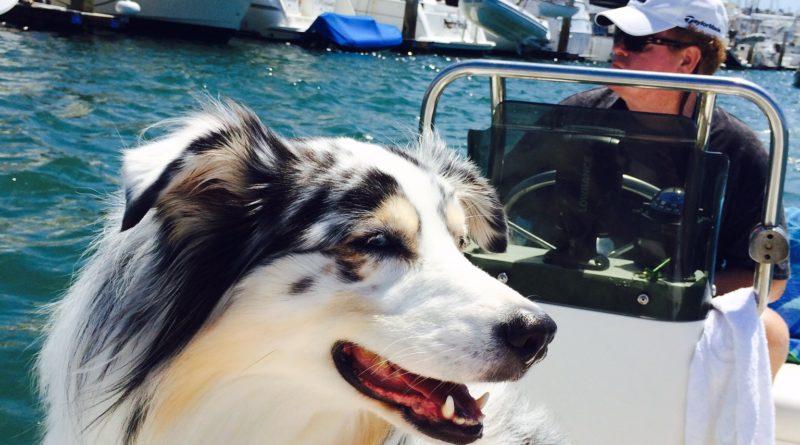 The Log's Dog Aboard