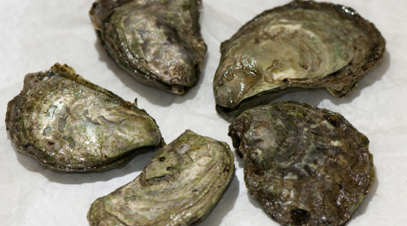Olympia Oyster Bed