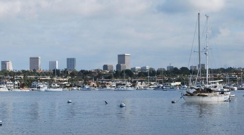 Newport Beach Sea Lions