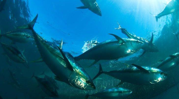 Tuna Hatchery