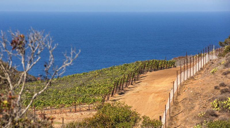 Rusack Vineyard Catalina
